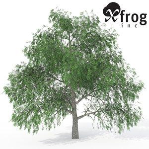 3d model xfrogplants pecan tree