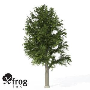 3d model xfrogplants european beech tree