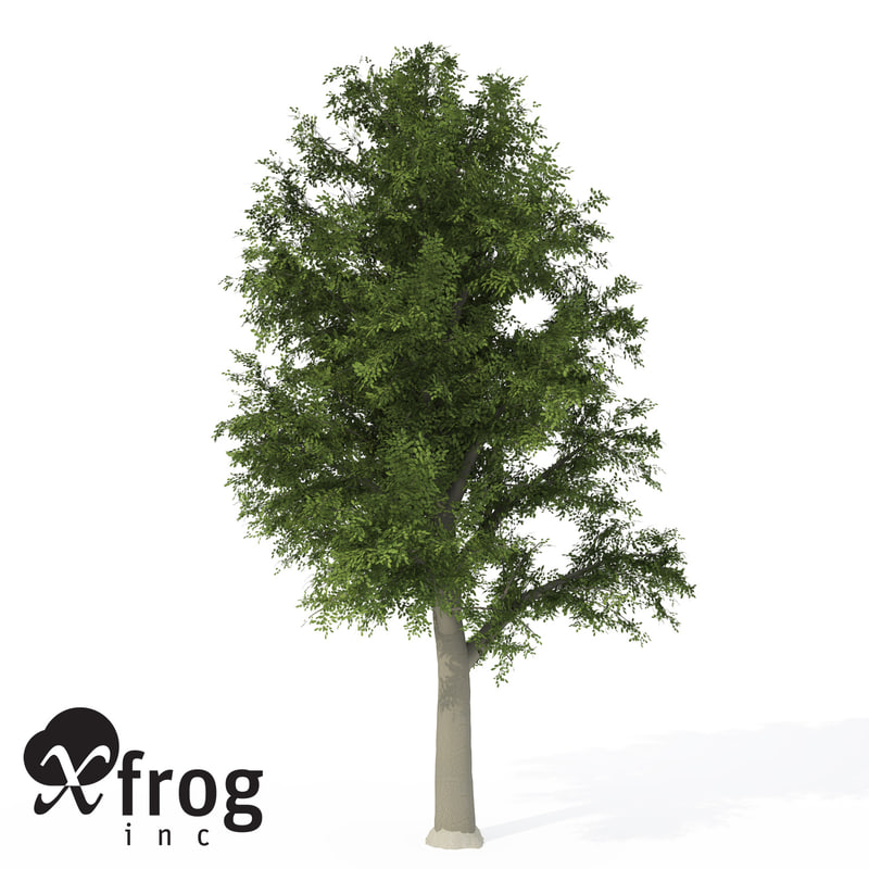 3d model xfrogplants european beech tree