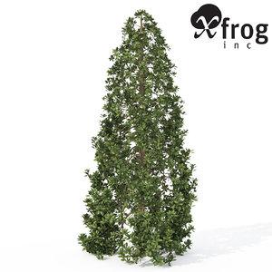 xfrogplants southern magnolia tree 3d model