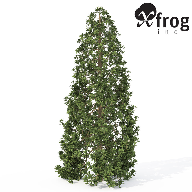 xfrogplants southern magnolia tree 3d model