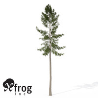 xfrogplants norway spruce tree 3ds