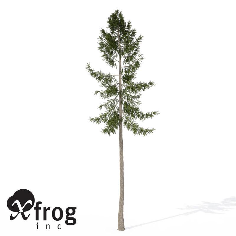 xfrogplants norway spruce tree 3ds