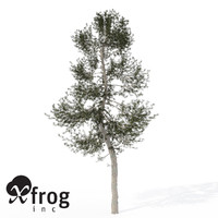 3d model xfrogplants austrian black pine