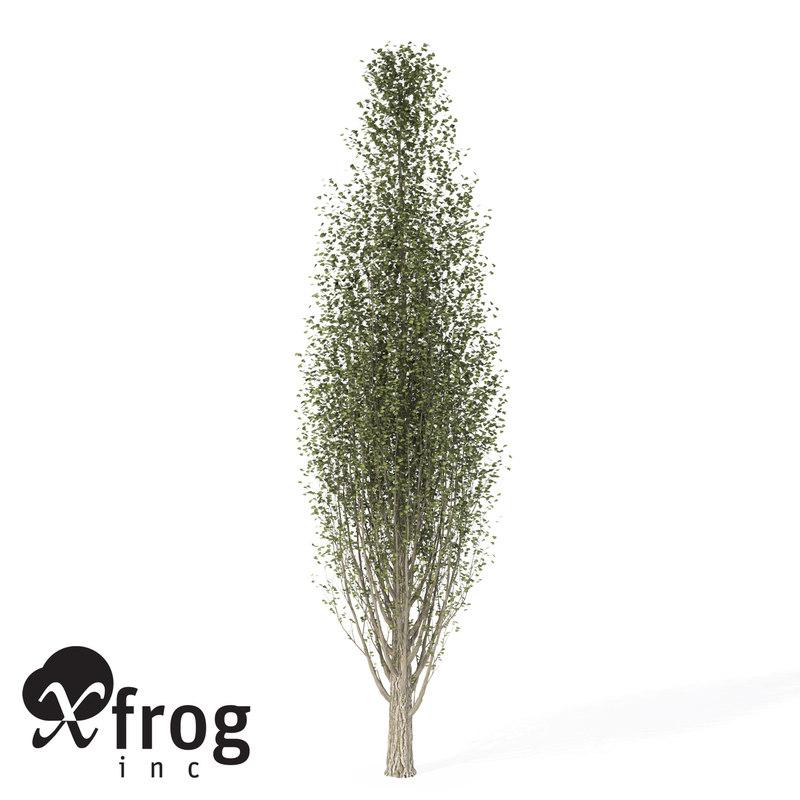 xfrogplants lombardy poplar tree 3d lwo