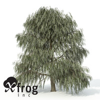 XfrogPlants Weeping Willow
