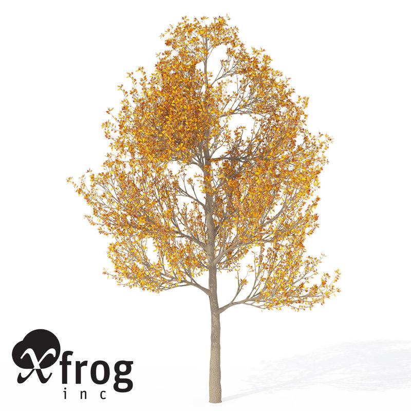 3ds max xfrogplants sassafras tree