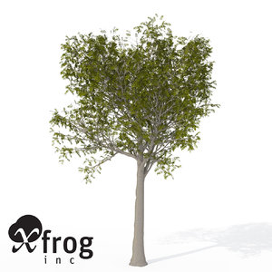 3d model xfrogplants european mountain ash