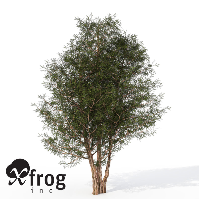 xfrogplants english yew tree 3d 3ds