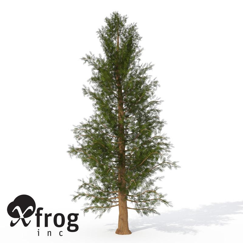 3d xfrogplants western red cedar model