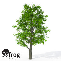 xfrogplants littleleaf linden tree 3d 3ds