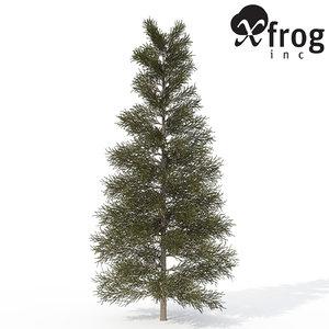 3d model xfrogplants silver fir tree