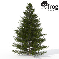 xfrogplants caucasian fir tree 3d max
