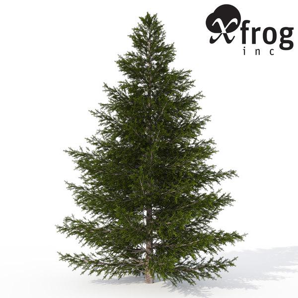 xfrogplants caucasian fir tree 3d max