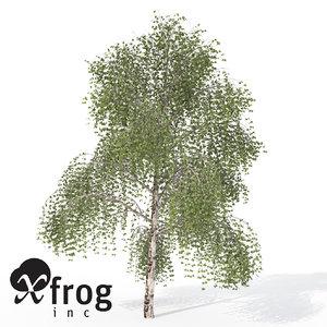 silver birch tree 3d model