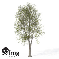 XfrogPlants Sweet Chestnut
