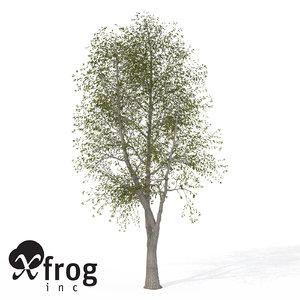 3d model xfrogplants sweet chestnut tree