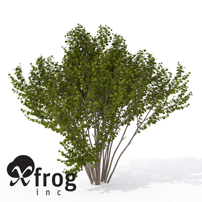3d xfrogplants hazel shrub model