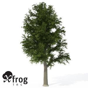 3d xfrogplants european beech tree