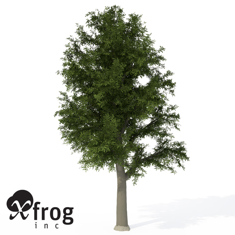 3d xfrogplants european beech tree