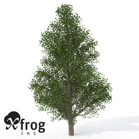 XfrogPlants Holly