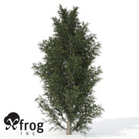 3d xfrogplants common juniper tree model