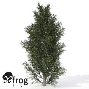 3d xfrogplants common juniper tree model