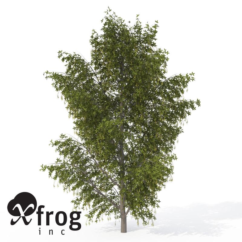 3ds max xfrogplants alpine laburnum tree