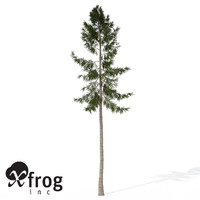 3d xfrogplants norway spruce tree