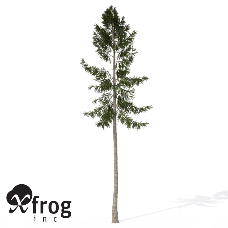 3d xfrogplants norway spruce tree
