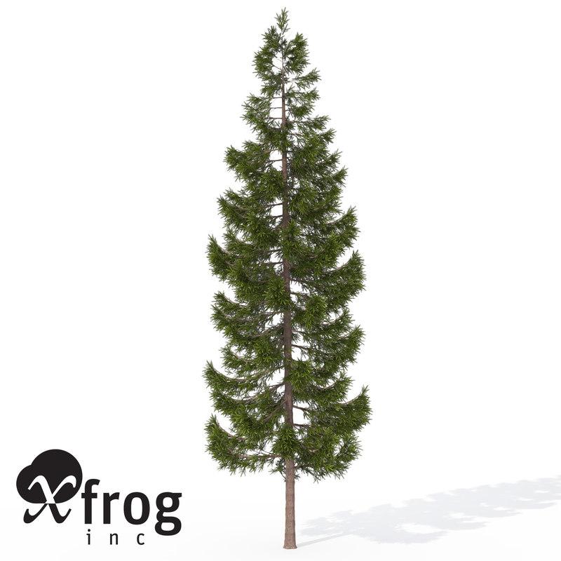 3d xfrogplants oriental spruce tree model