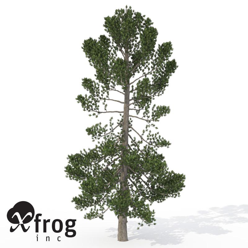 maya xfrogplants swiss stone pine