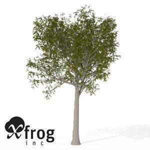 3dsmax xfrogplants european mountain ash