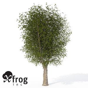 xfrogplants oriental planetree tree 3d model