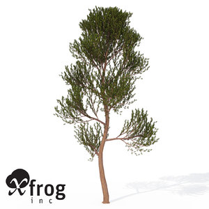 xfrogplants scotch pine tree 3d model