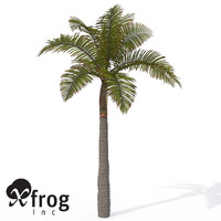 XfrogPlants King Palm