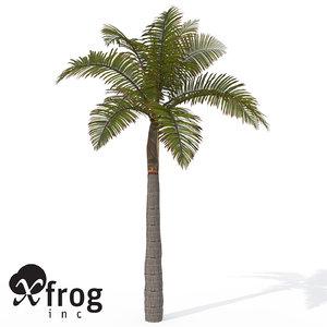 xfrogplants king palm plant max