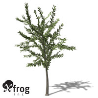 dicroidium plant 3d model