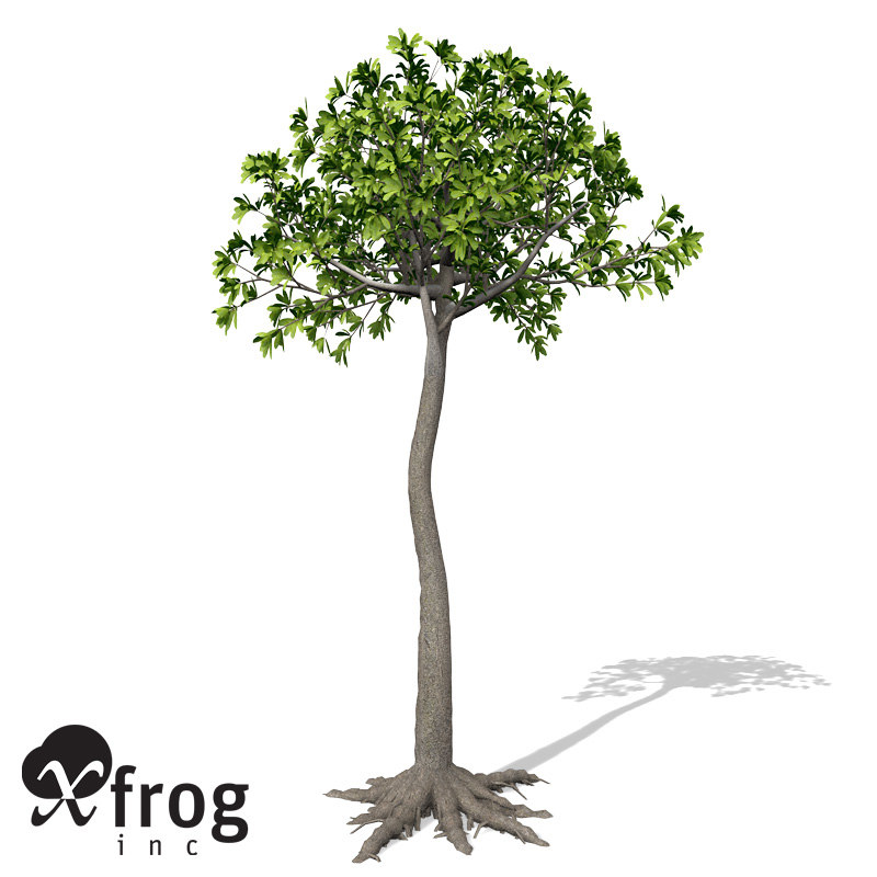 glossopteris plant 3d model