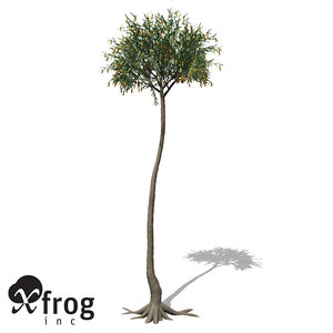 max xfrogplants lepidodendron plant tree