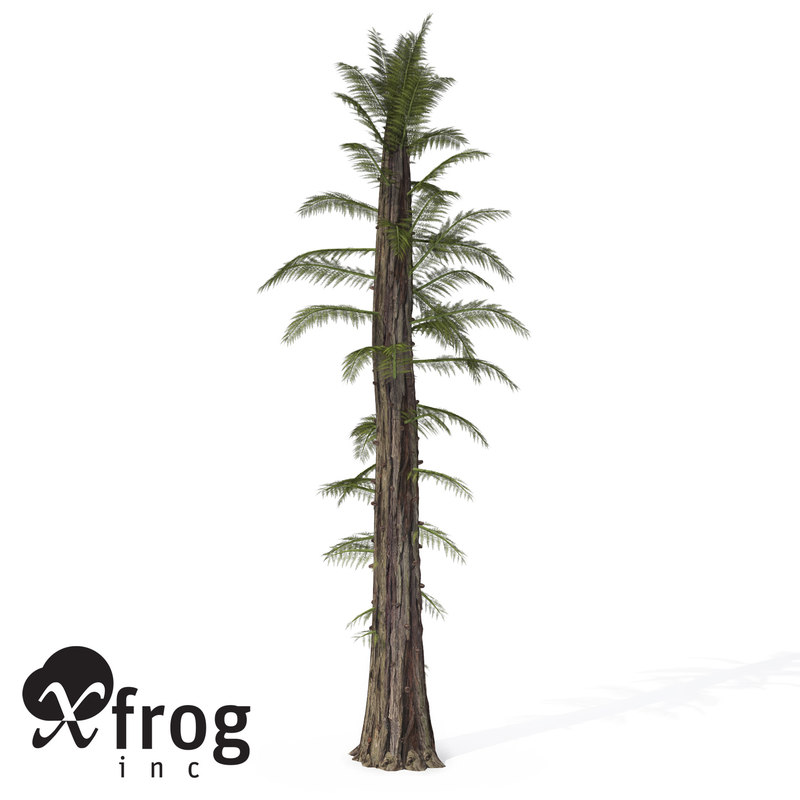 tempskya tree fern 3d model