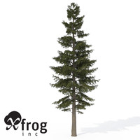 XfrogPlants White Fir