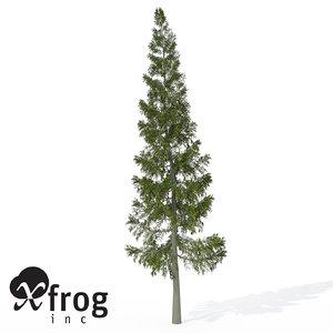 grand fir tree 3d model
