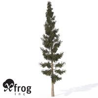 maya xfrogplants california red fir