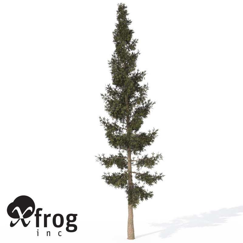 maya xfrogplants california red fir