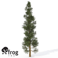 XfrogPlants Incense Cedar