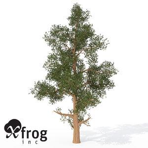 xfrogplants western juniper tree 3ds