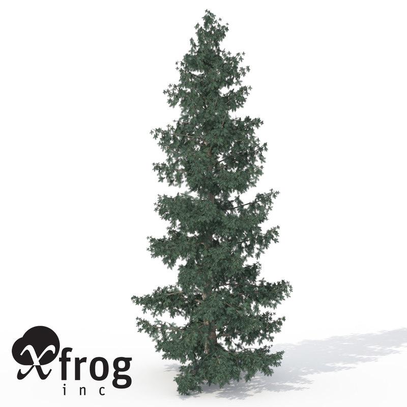3dsmax xfrogplants engelmann white spruce