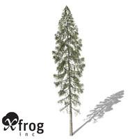 XfrogPlants Black Spruce
