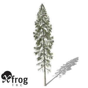 3d xfrogplants black spruce tree model